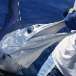 CALL For Great Fishing Charters!